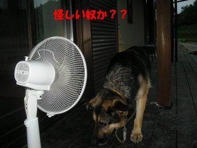 b0113663_823060.jpg