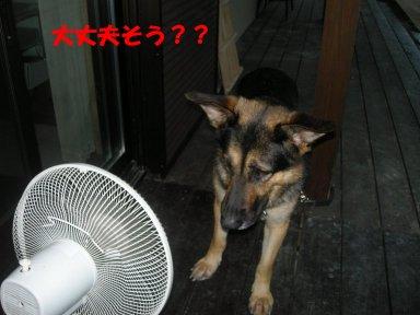 b0113663_8232038.jpg