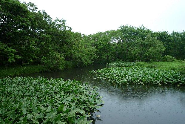 雨中の植物_d0030373_17483730.jpg