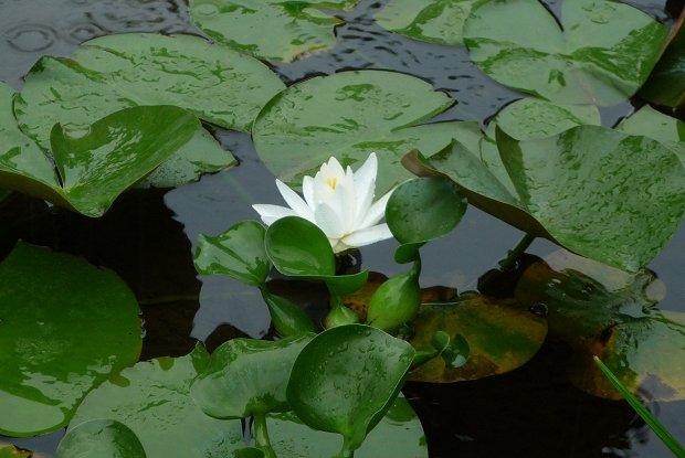 雨中の植物_d0030373_17514054.jpg