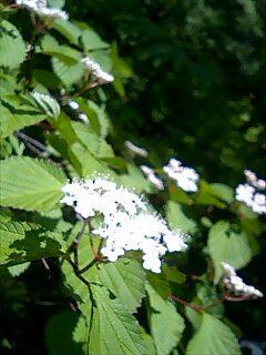 裏庭の林の中で_c0048494_16305289.jpg