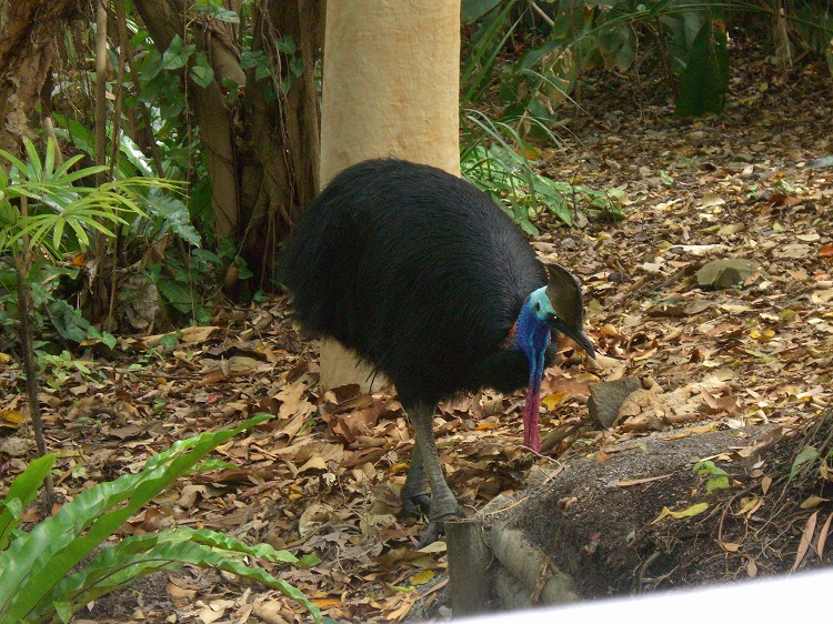 ノースクイーンズランドの動物たち_d0116009_2244922.jpg