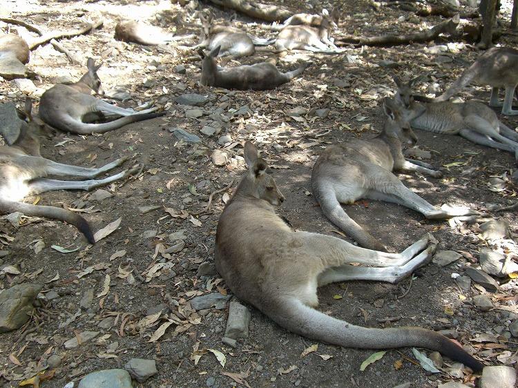 ノースクイーンズランドの動物たち_d0116009_2245973.jpg