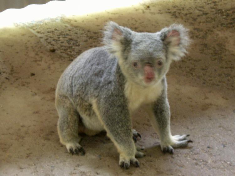 ノースクイーンズランドの動物たち_d0116009_2251150.jpg