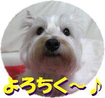 f0084422_22275729.jpg