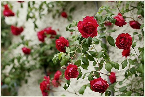 夏の裏庭_b0117234_6354664.jpg