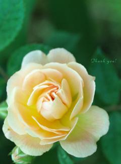 なつの庭 ♪_a0094336_2052761.jpg