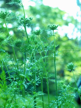 なつの庭 ♪_a0094336_20541772.jpg