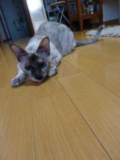 猫のお友だち カイリちゃん編。_a0143140_21434972.jpg