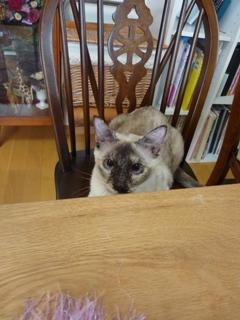 猫のお友だち カイリちゃん編。_a0143140_21442593.jpg