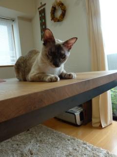 猫のお友だち カイリちゃん編。_a0143140_21444681.jpg