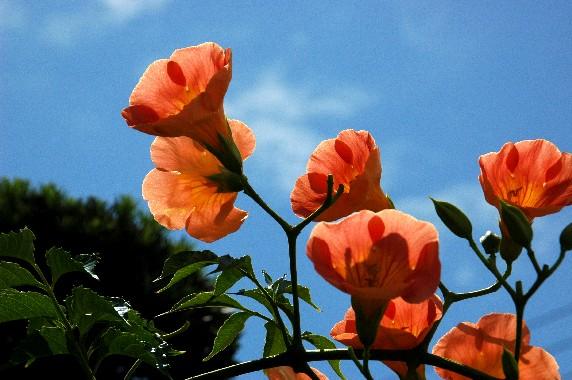 和歌山県植物公園緑花センター _b0093754_23492146.jpg