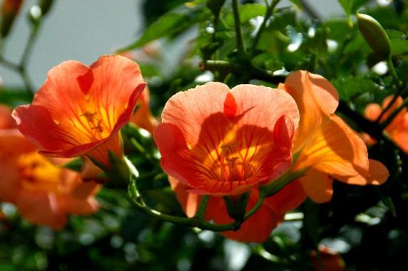 和歌山県植物公園緑花センター _b0093754_23492719.jpg