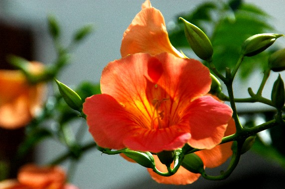 和歌山県植物公園緑花センター _b0093754_23493479.jpg