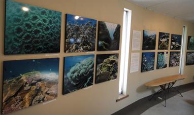 生命のサンゴ礁_e0109554_985883.jpg