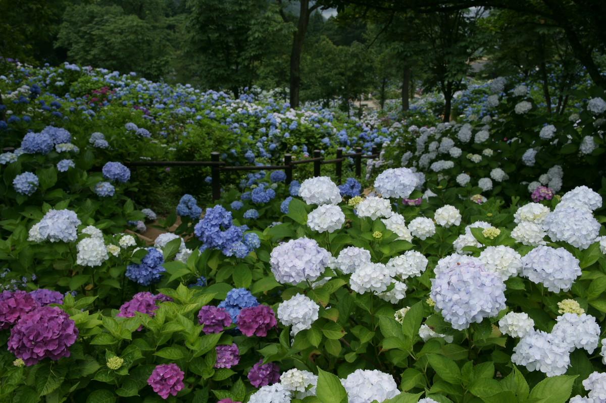 京都 舞鶴自然文化園 2_f0021869_20552268.jpg