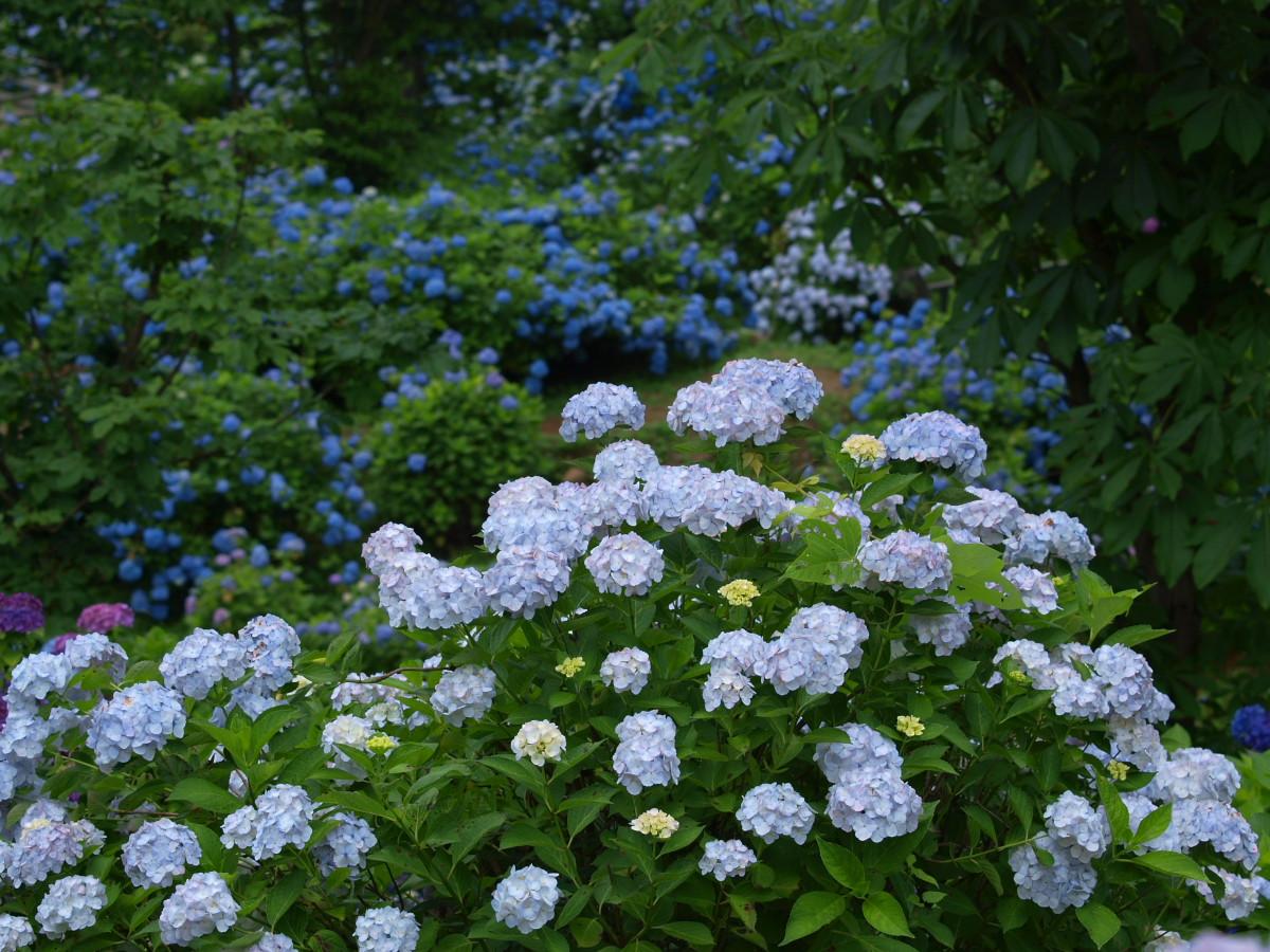 京都 舞鶴自然文化園 2_f0021869_20564777.jpg