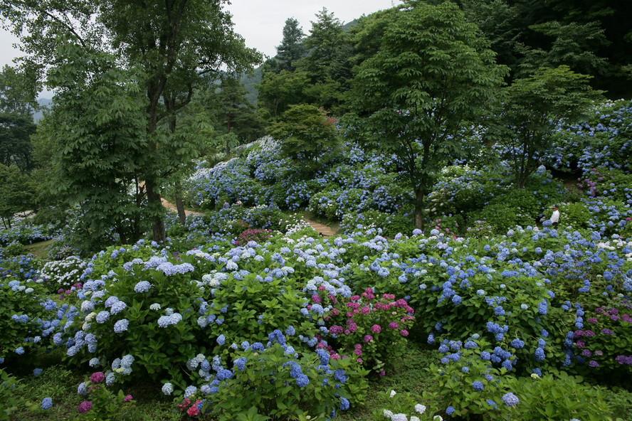 京都 舞鶴自然文化園 2_f0021869_20572476.jpg