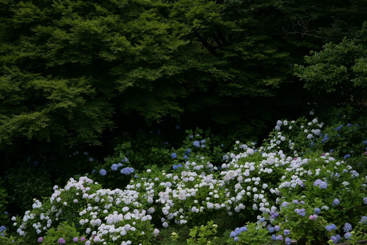 京都 舞鶴自然文化園 2_f0021869_20582217.jpg