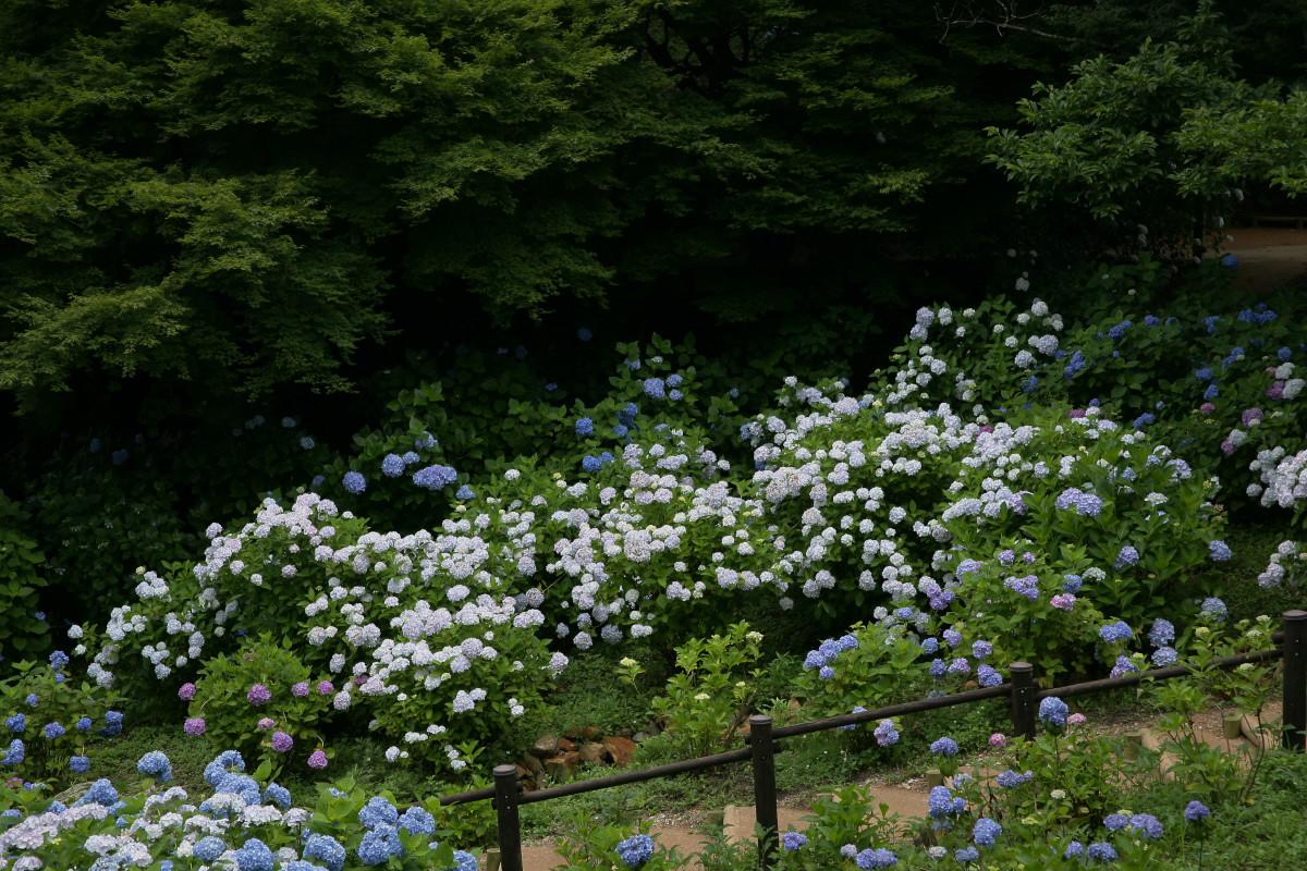 京都 舞鶴自然文化園 2_f0021869_2102697.jpg