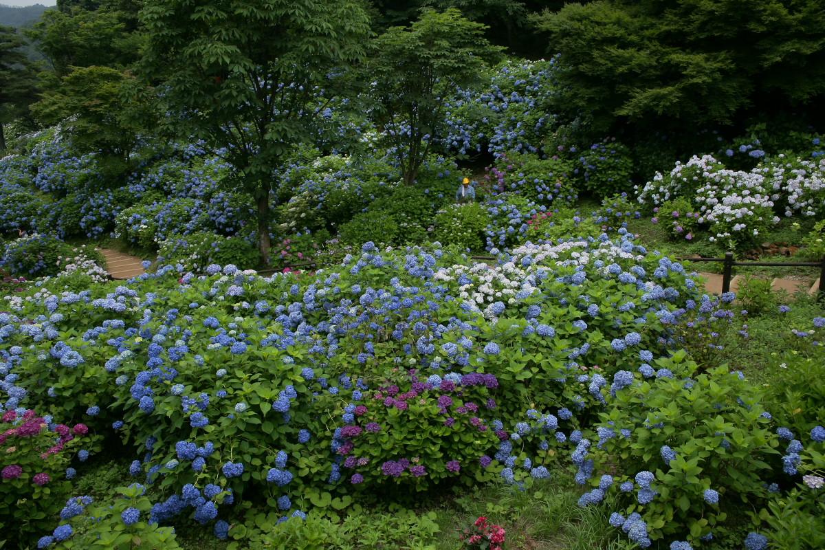京都 舞鶴自然文化園 2_f0021869_210620.jpg