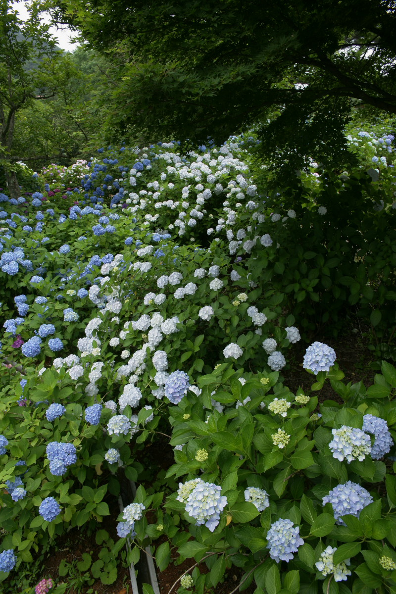 京都 舞鶴自然文化園 2_f0021869_21102246.jpg