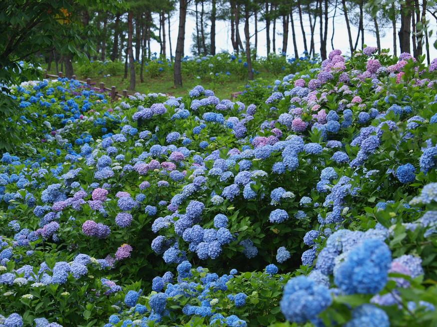 京都 舞鶴自然文化園 2_f0021869_2113231.jpg