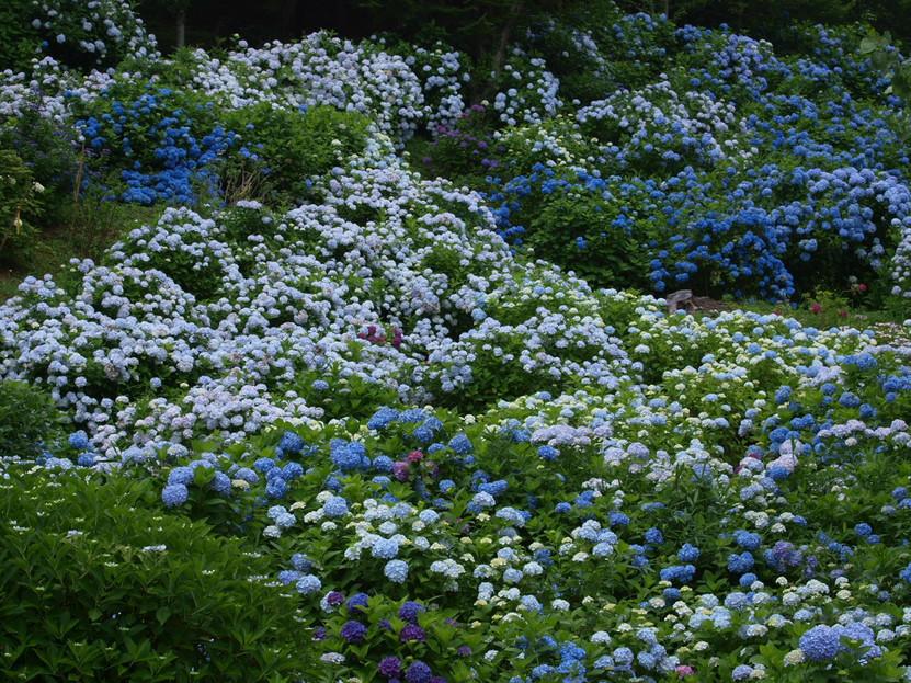 京都 舞鶴自然文化園 2_f0021869_2143545.jpg