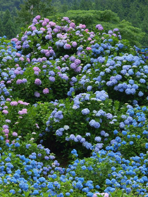 京都 舞鶴自然文化園 2_f0021869_2173768.jpg