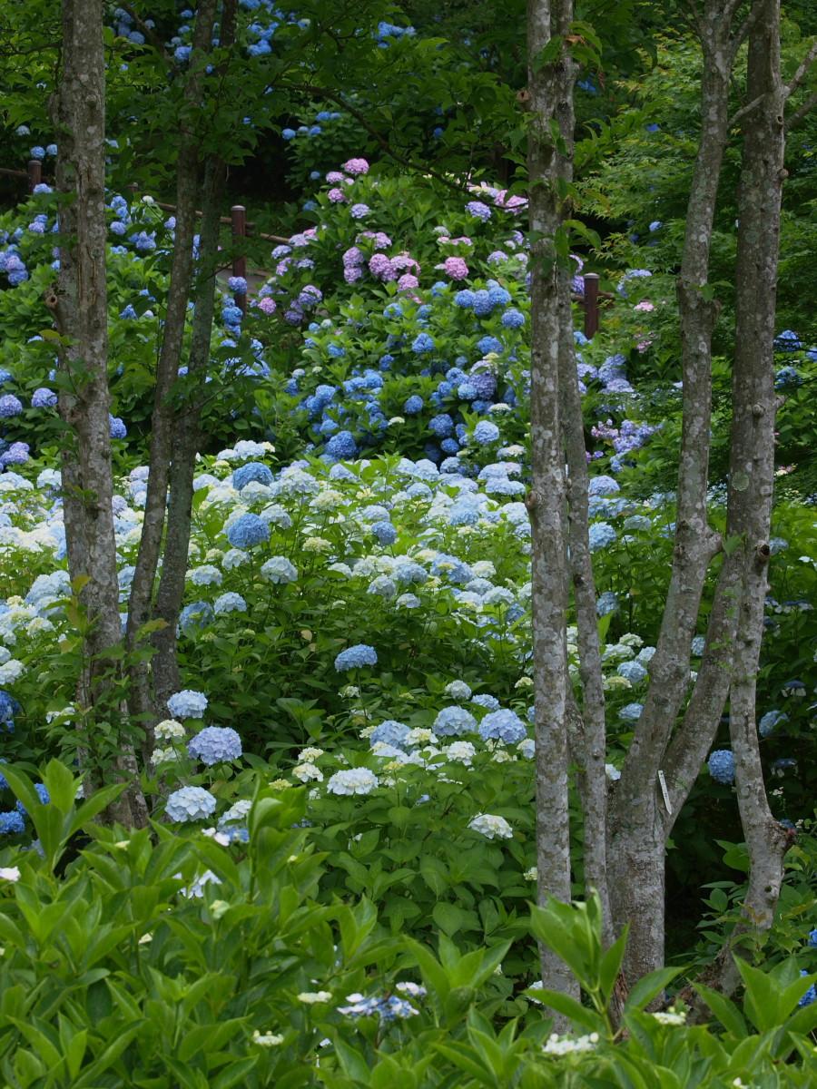京都 舞鶴自然文化園 2_f0021869_2181295.jpg