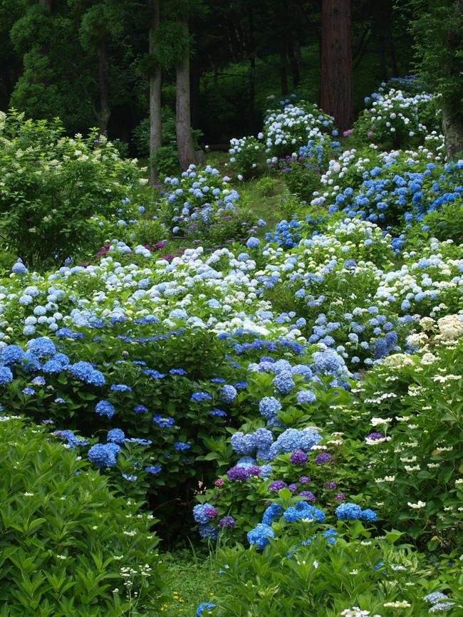 京都 舞鶴自然文化園 2_f0021869_2184119.jpg