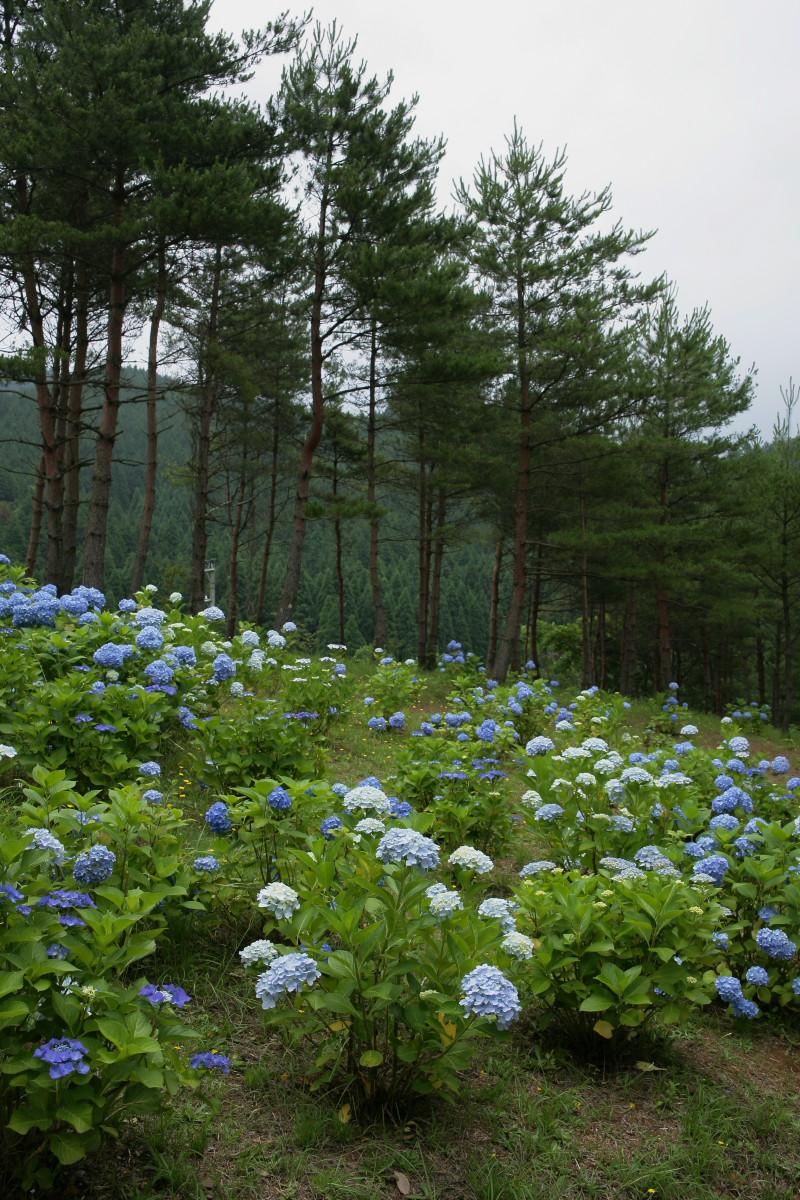 京都 舞鶴自然文化園 2_f0021869_2193789.jpg