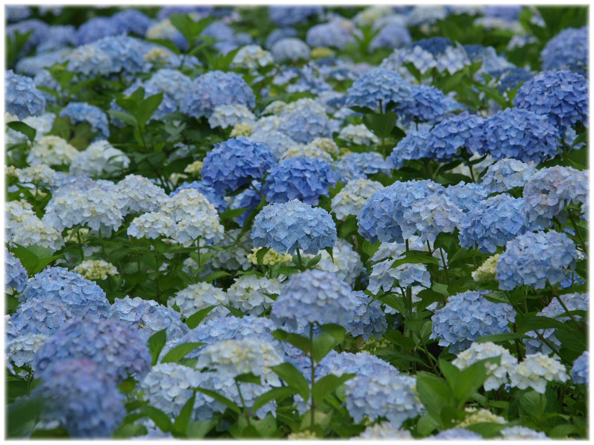 京都 舞鶴自然文化園 2_f0021869_2254844.jpg