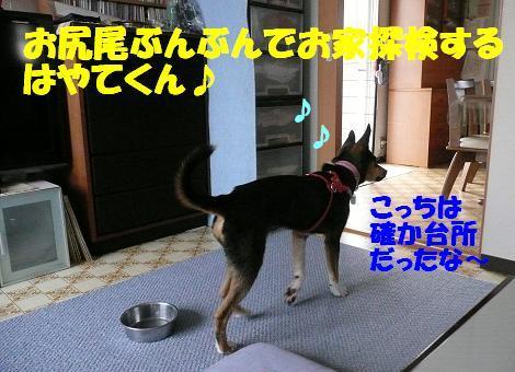f0121712_10315362.jpg