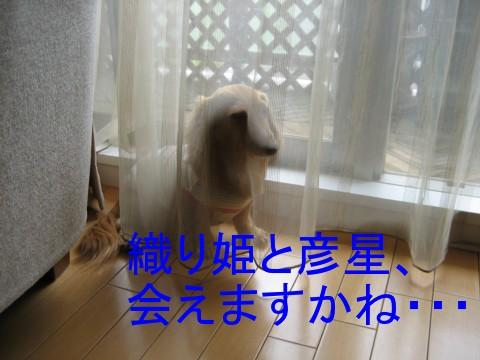 b0160052_1561724.jpg