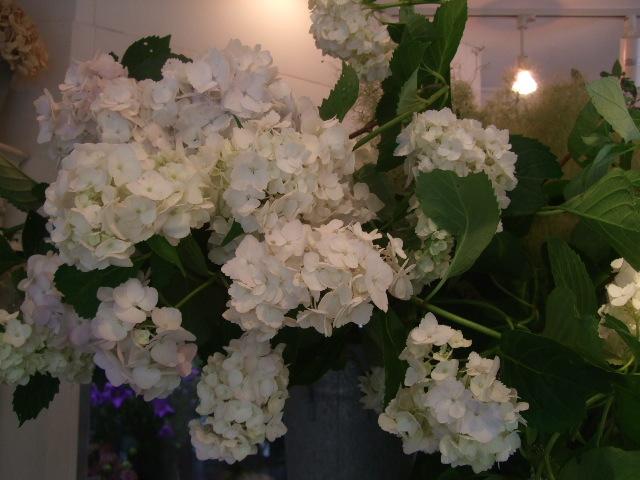 オークリーフ(紫陽花と実のもの)_f0049672_13452035.jpg