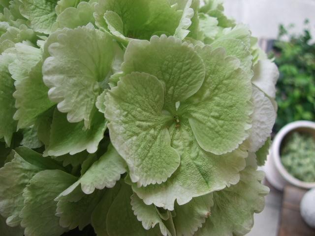 オークリーフ(紫陽花と実のもの)_f0049672_13453078.jpg