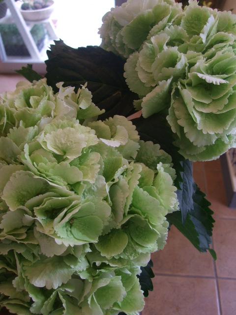 オークリーフ(紫陽花と実のもの)_f0049672_13453711.jpg