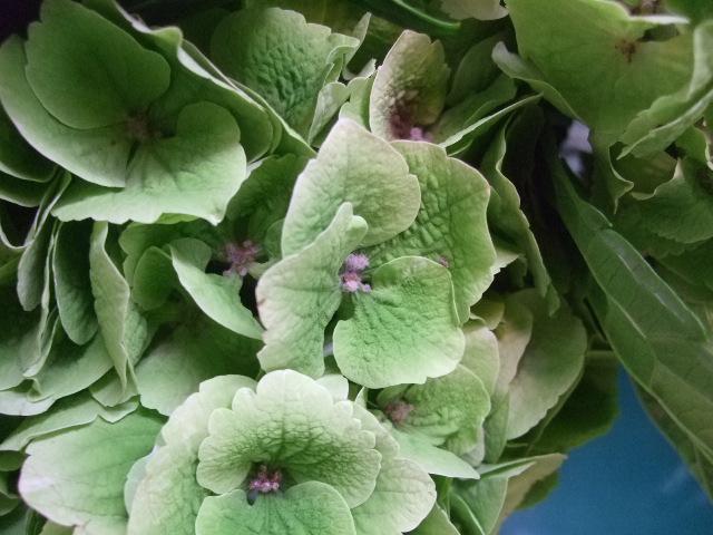 オークリーフ(紫陽花と実のもの)_f0049672_13454476.jpg