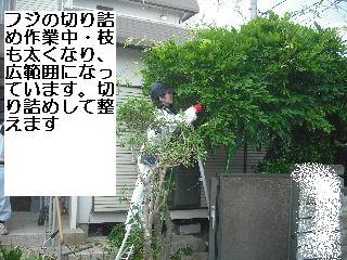f0031037_20203318.jpg