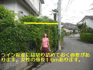 f0031037_2041474.jpg