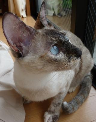 猫のお友だち カイリちゃん編。_a0143140_2339387.jpg