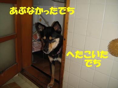 c0211642_16274414.jpg
