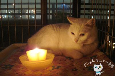 キャンドルナイト最終日_e0031853_13293766.jpg