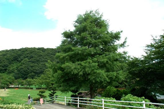 和歌山県植物公園緑花センター _b0093754_043844.jpg