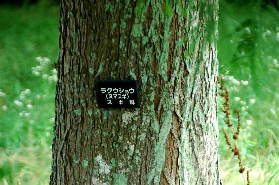 和歌山県植物公園緑花センター _b0093754_0601.jpg