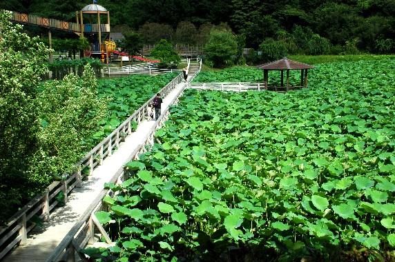 和歌山県植物公園緑花センター _b0093754_2358851.jpg