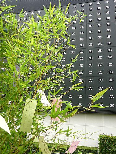 2010 銀座 マルシェ・ド・アラン・デュカス 小島 景 を支える生産者達@ル・ジャルダン・ドゥ・ツイード☆_a0053662_1853399.jpg