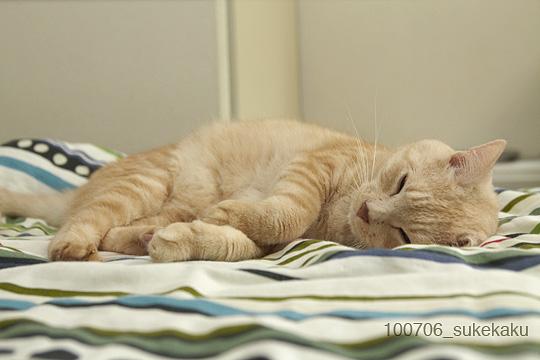 昼寝中の猫_a0002672_1340488.jpg