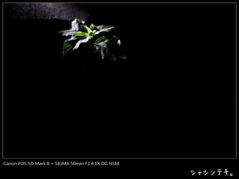 c0194174_15514093.jpg
